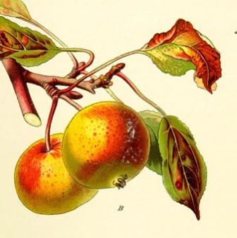 Казка про яблуню