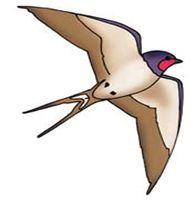 Дбайливі пташки