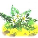 Цвіт папороті