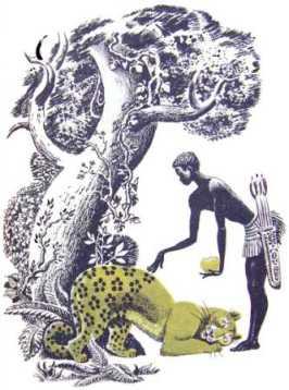 Як у леопарда з'явилися плями