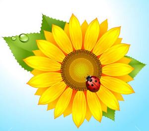 Квітка сонця