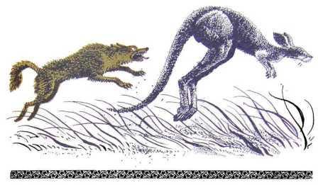 Приповідка про старого кенгуру
