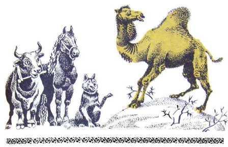 Як у Верблюда виріс горб